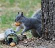 Squirrel study