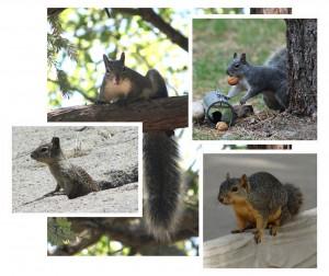 squirrel_lecture