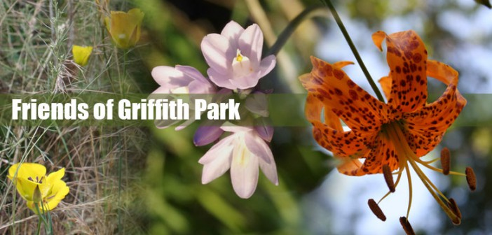 Please Join FoGP and Jorge Ochoa for a Walk in the Park