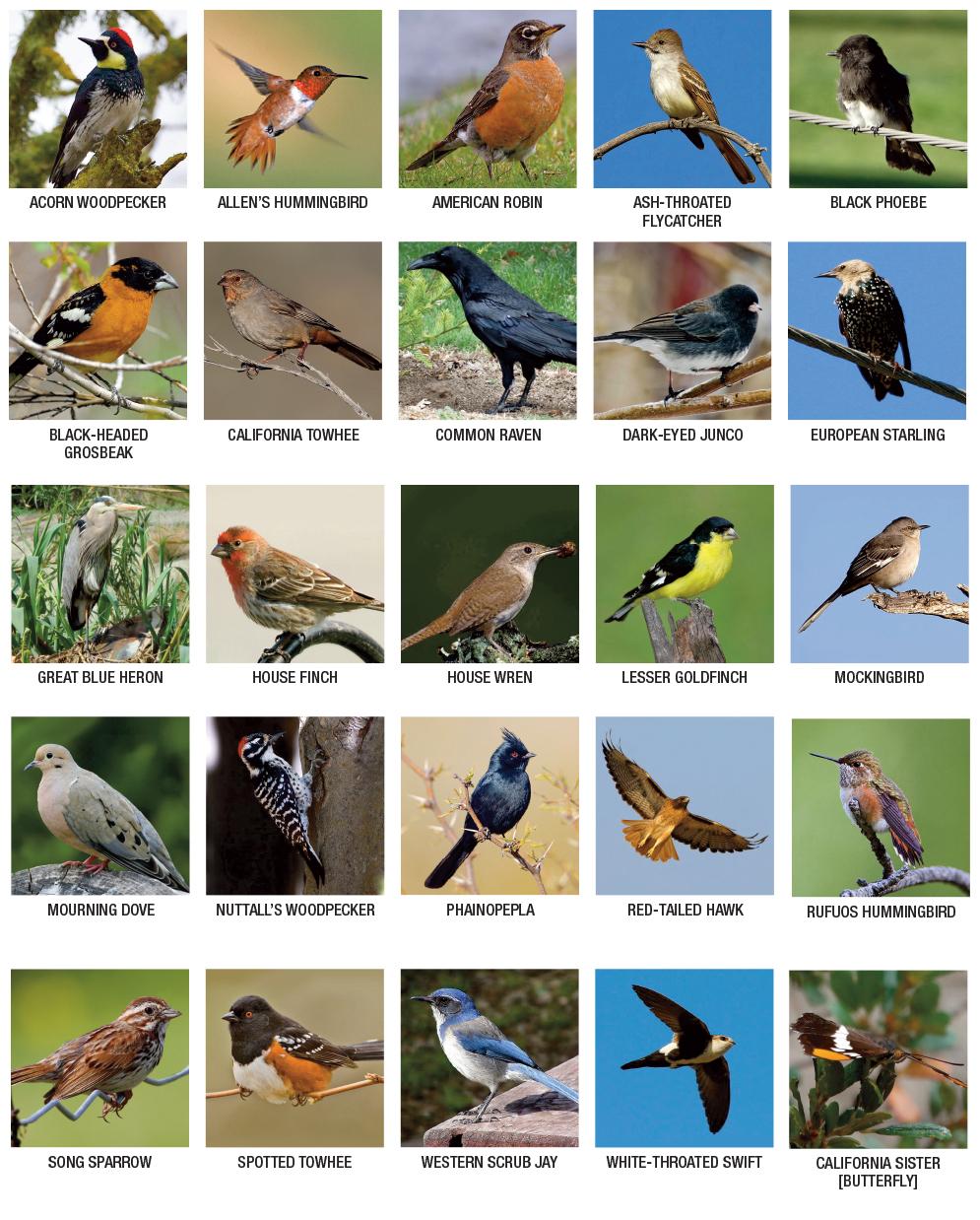 bird-list1