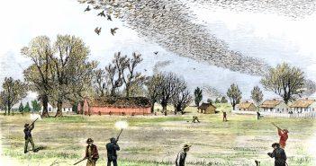 shootingpigeons[1]