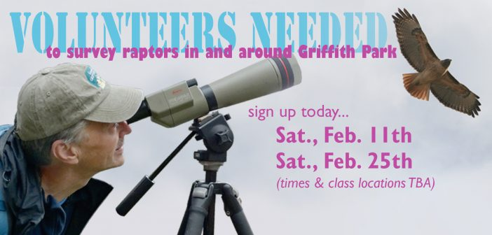 Volunteers Needed to Survey Raptors in and Around Griffith Park