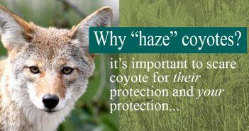 hazing-banner