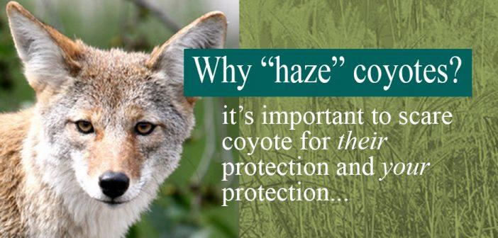 Coyote Hazing Meeting / Video