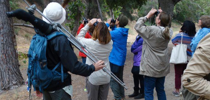Chalking up Bird Sightings at Bird LA Day 2017