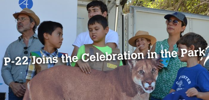 Celebrating P-22 Day in Griffith Park