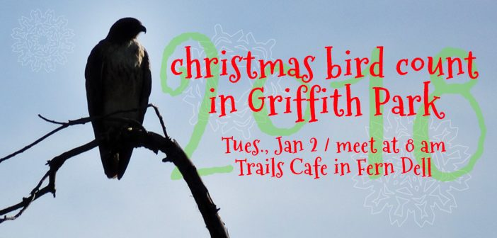 Xmas Bird Count / Griffith Park