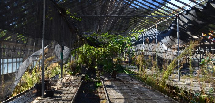 The History of Commonwealth Nursery